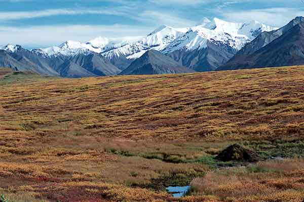 Team 7: Ecology of non-migratory species in ANWR