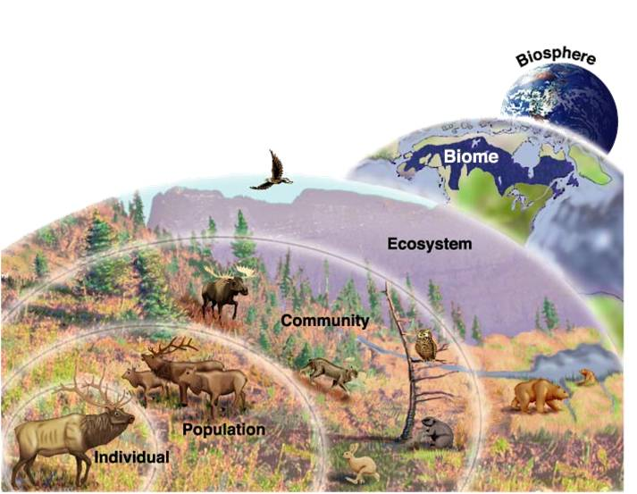 mission 2015  what is biodiversity