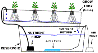 Hydroponic business plan