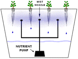 Mission 2015 Hydroponic Agriculture