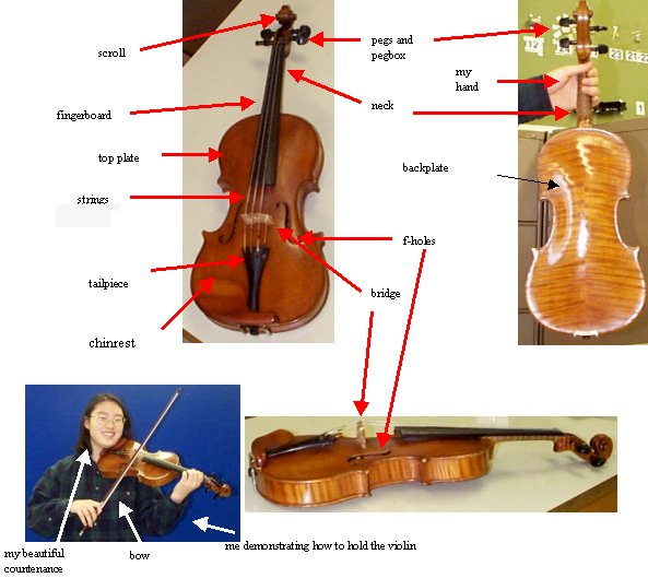 2972 How A Violin Works