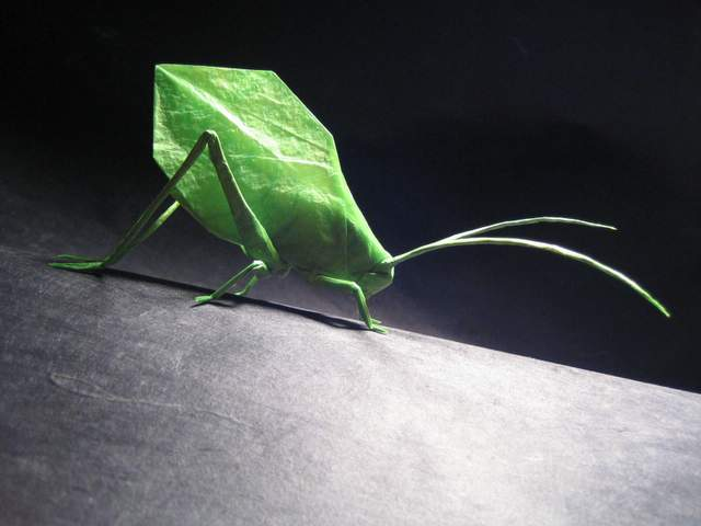 Ive Always Liked The Grasshoppers And Crickets Of All Sorts Maybe It Is Because They Can Jump Make Noise This Katydid Known For Its Ability To