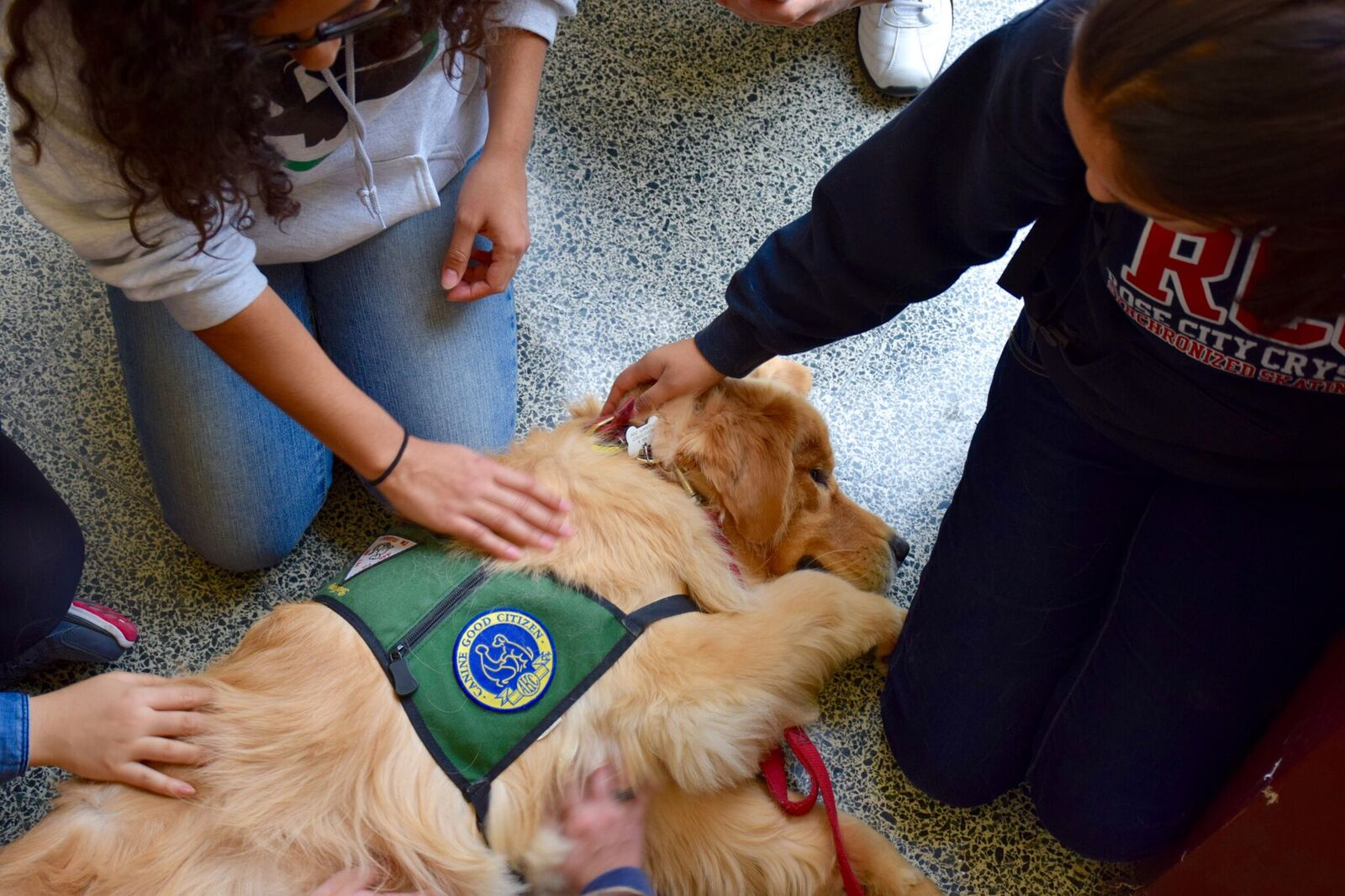 Students relieve stress by cuddling with canines from the Puppy Lab.