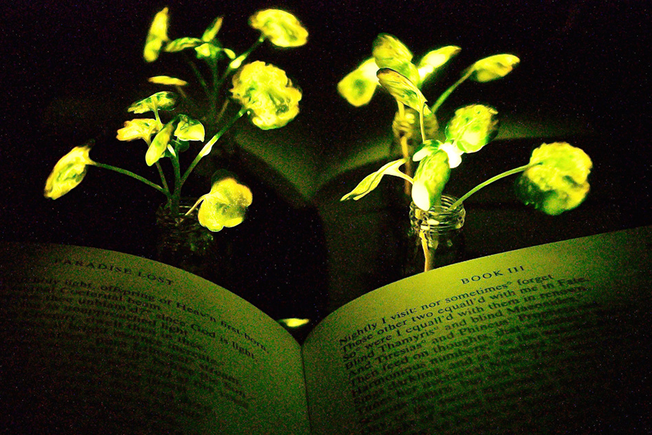 Glowing plants could do double duty as desk lamps