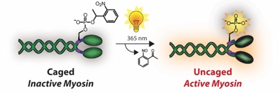 New and efficient approaches to the semisynthesis of taxol