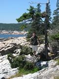 Acadia1229_OtterCliff