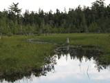 Acadia1768_JordanPondWalk