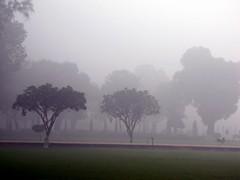 Agra252_TajMahal_Gardens