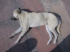 Agra373_VatehpurSikri