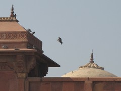Agra388_VatehpurSikri