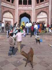 Agra521_JamiMasjid