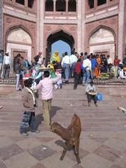 Agra521_JamiMasjid