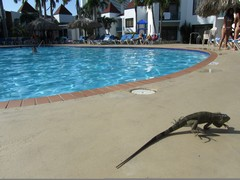Honeymoon ResortsTheMill - Iguanas - Dec'10