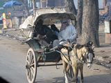 DelhiStreets563_Animals