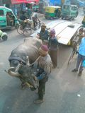 DelhiStreets605_Animals