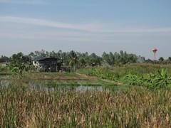 Ayutthaya157_RiceFields