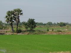 Ayutthaya169_RiceFields