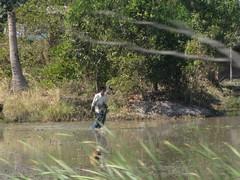 Ayutthaya176_RiceFields