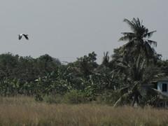 Ayutthaya178_RiceFields