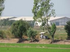Ayutthaya195_RiceFields