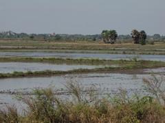 Ayutthaya197_RiceFields