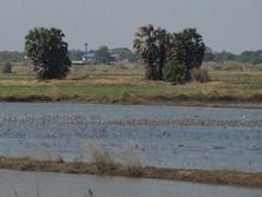 Ayutthaya200_RiceFields