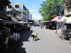 Ayutthaya263_Town