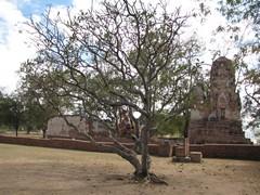 Ayutthaya418_WatMahathat_Prangs
