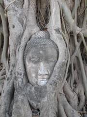 Ayutthaya438_WatMahathat_BuddhaTree