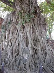Ayutthaya440_WatMahathat_BuddhaTree