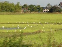 Ayutthaya611_ReturnTrain