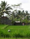 Bali015_Bedulu2Kintamani2