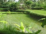 Bali020_Bedulu2Kintamani