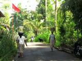 Bali063_Bedulu2Kintamani