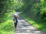 Bali076_Bedulu2Kintamani