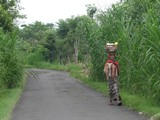 Bali125_Bedulu2Kintamani