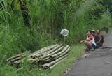 Bali127_Bedulu2Kintamani