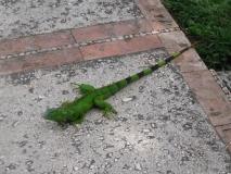 Belize079