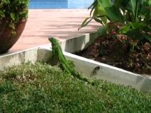 Belize080