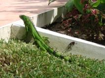 Belize081