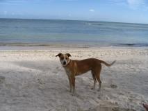 Belize108