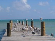 Belize171