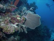 BelizeDive01