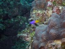 BelizeDive03