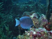 BelizeDive05