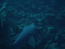 BelizeDive06