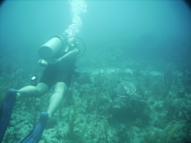 TurtleDive06