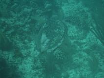 TurtleDive07