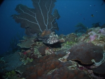 TurtleDive08