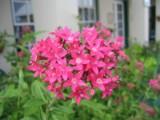 Flowers29